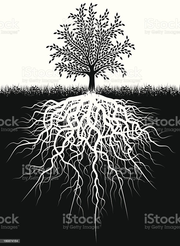 Black and white illustration of tree and the roots in ground vector art illustration