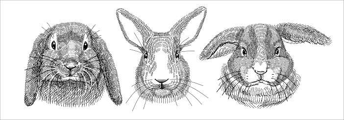 Black and white illustration, sketch drawn with a pen. Set of domestic rabbits, portraits of heads. Isolated background