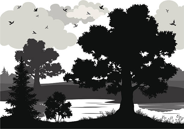 stockillustraties, clipart, cartoons en iconen met black and white image of trees, river, and bird silhouettes - grassenfamilie