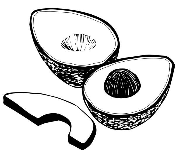 Black and White Line Drawing Vector Clip Art Illustration vector art illustration