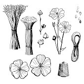 Black and white line illustration of flax  flowers.