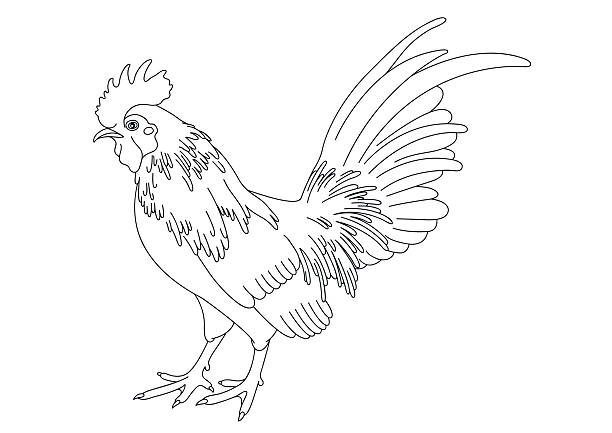 Best Black And White Rooster Illustrations, Royalty-Free ...