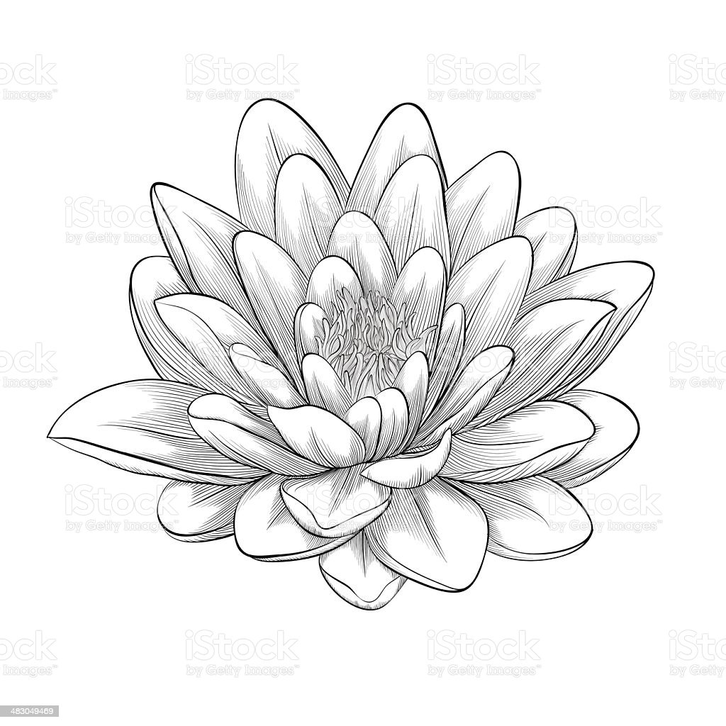 black and white lotus flower painted in graphic style isolated vector art illustration