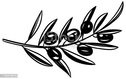 Black and white olive fruit in sketchy style