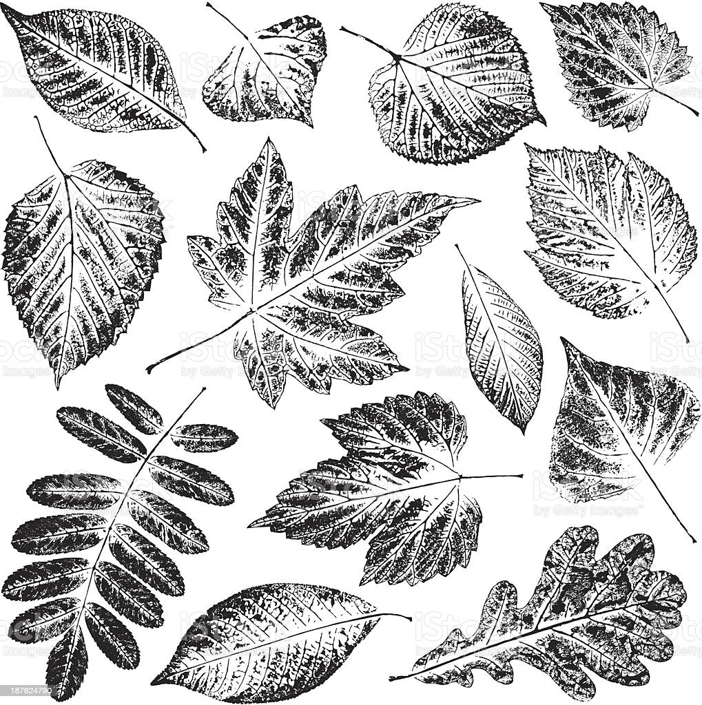Black and white pictures of leaves in white background vector art illustration