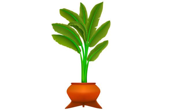 흑백 룸 - 관상용 식물 stock illustrations