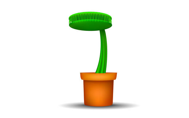 black and white room Venus flytrap tree in pot on the white background macrophotography stock illustrations