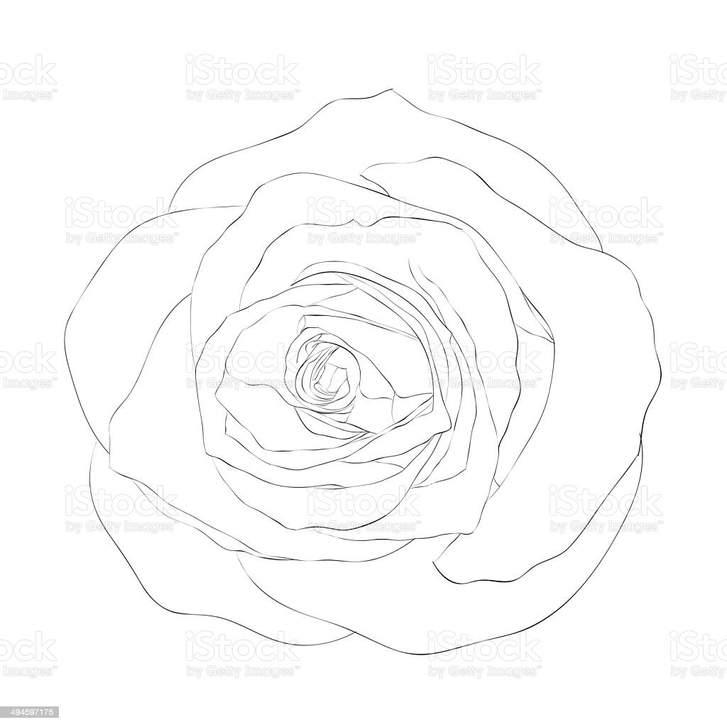 black and white rose isolated on white background. royalty-free black and white rose isolated on white background stock vector art & more images of abstract