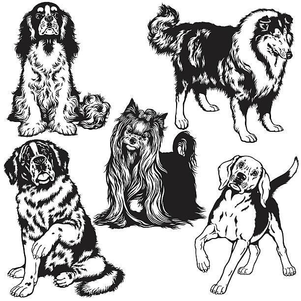 schwarz und weiß set mit hunde - collie stock-grafiken, -clipart, -cartoons und -symbole