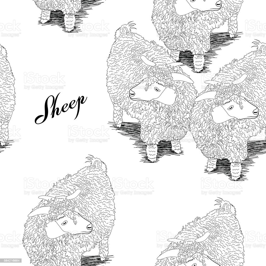 Black and white sheeps - Illustration vectorielle