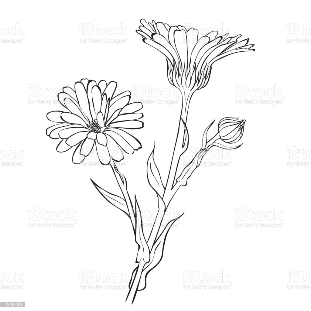 black and white sketch of blooming flowers stock vector art more images of 2015 464924624 istock. Black Bedroom Furniture Sets. Home Design Ideas