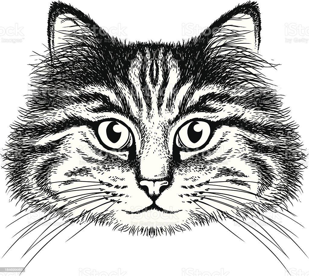 Bianco E Nero Disegno Ritratto Di Un Gatto Immagini Vettoriali
