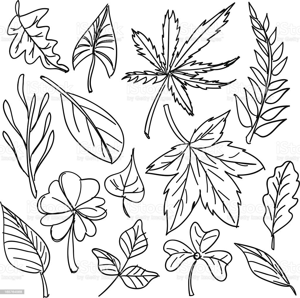 Black and white sketches of leaves vector art illustration