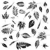 Black and white stamps of different leaves. Engraving silhouettes. Botanical illustration elements.