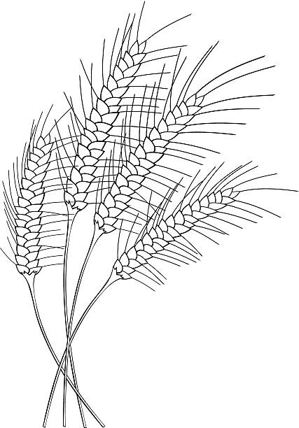 Black and White Stylized Wheat vector art illustration