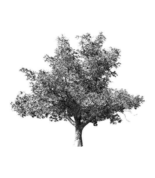 black and white tree drawing illustration - architecture silhouettes stock illustrations