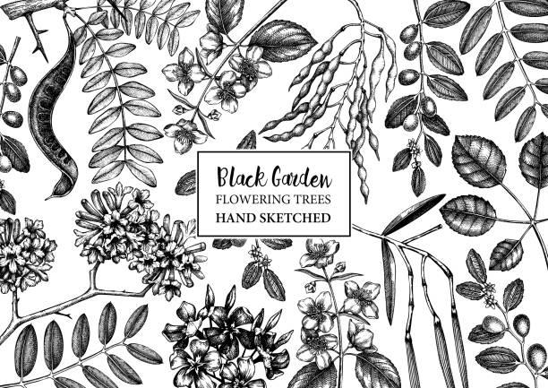 schwarz-weiße bäume design - robinie stock-grafiken, -clipart, -cartoons und -symbole