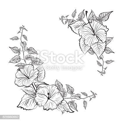 Schwarzweiß Tropischen Hibiskus Blumenrahmen Stock Vektor Art und ...