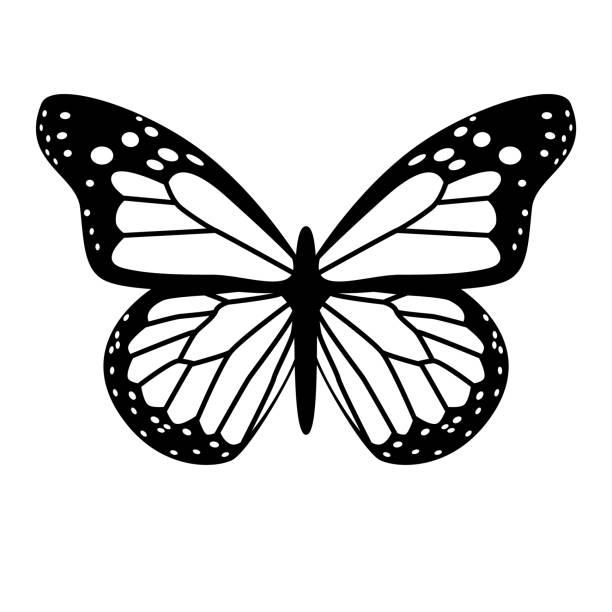 black and white vector butterfly vector art illustration