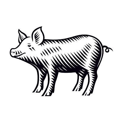 A black and white vector illustration of a piglet