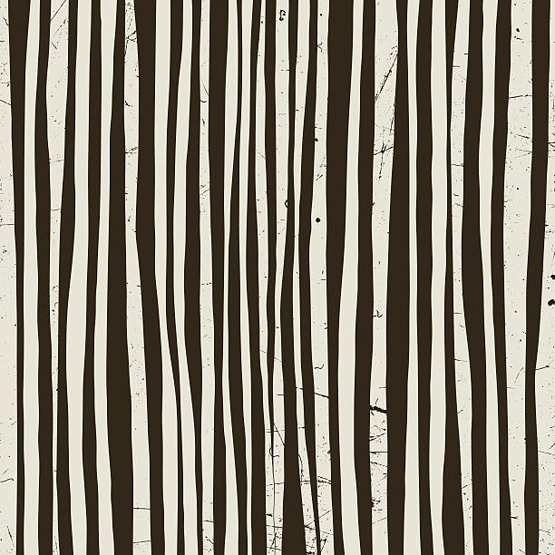 Black and white vector stripes. Black and white stripes with grunge texture. Vector striped background. animal markings stock illustrations