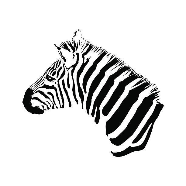 Royalty Free Silhouette Of A Zebra Head Clip Art, Vector ...