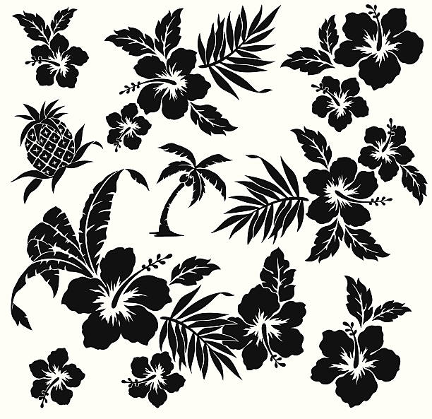 A black animated picture of the flower hibiscus on white I drew Hibiscus for a design hawaiian culture stock illustrations