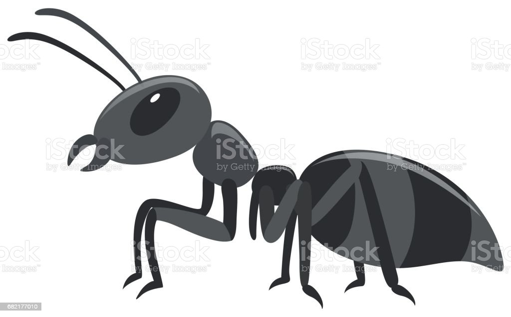 Black ant on white background vector art illustration