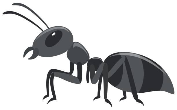 Black ant on white background vector art illustration