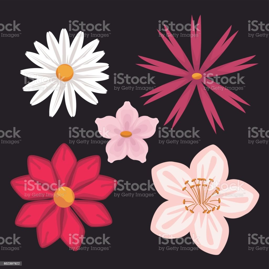 Black background with colorful different types of flowers stock black background with colorful different types of flowers royalty free stock vector art izmirmasajfo