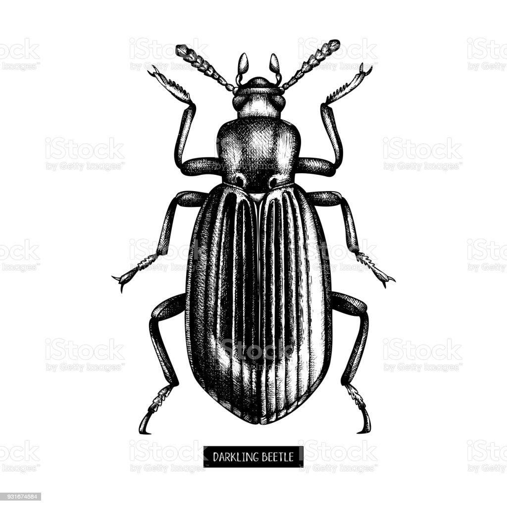 Ilustración de Ilustración De Escarabajo Negro y más banco de ...