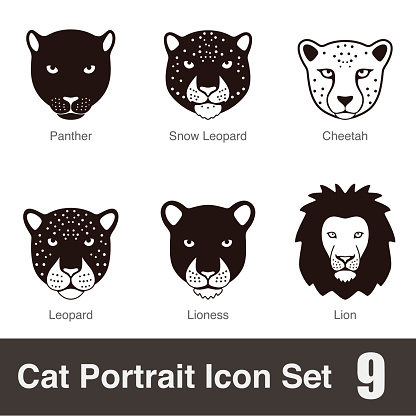 black big cat breed face cartoon flat icon series