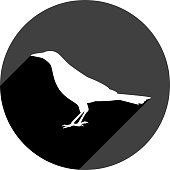 Vector illustration of a black bird icon in flat style.