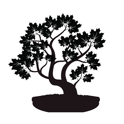 Black Bonsai Maple Tree. Illustration.