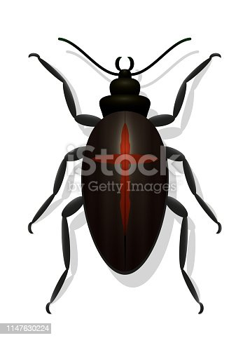 Black bug with red cross. Black widow beetle. Symbolic for dangerous, toxic, poisonous insects or for decline in insect populations. Vector on white background.
