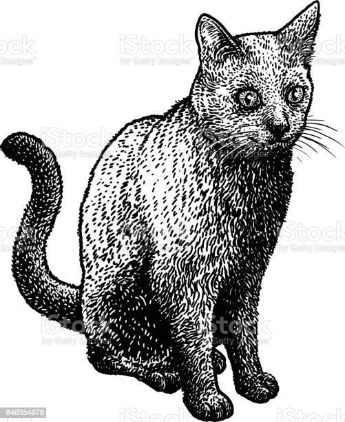 Black cat illustration drawing engraving ink line art vector vector id846354678?b=1&k=6&m=846354678&s=612x612&h=4kthmieyrklsmf9munfchmgziw yrhwke0zehdvmxqg=