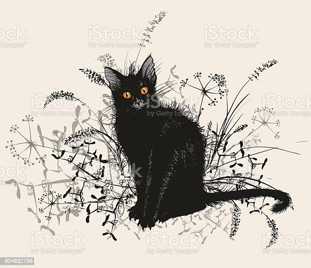 Black cat in a grass vector id504632756?b=1&k=6&m=504632756&s=612x612&h=alaprjm1s unw4iitv4wcepgidbkb9zszfqcn 6apem=