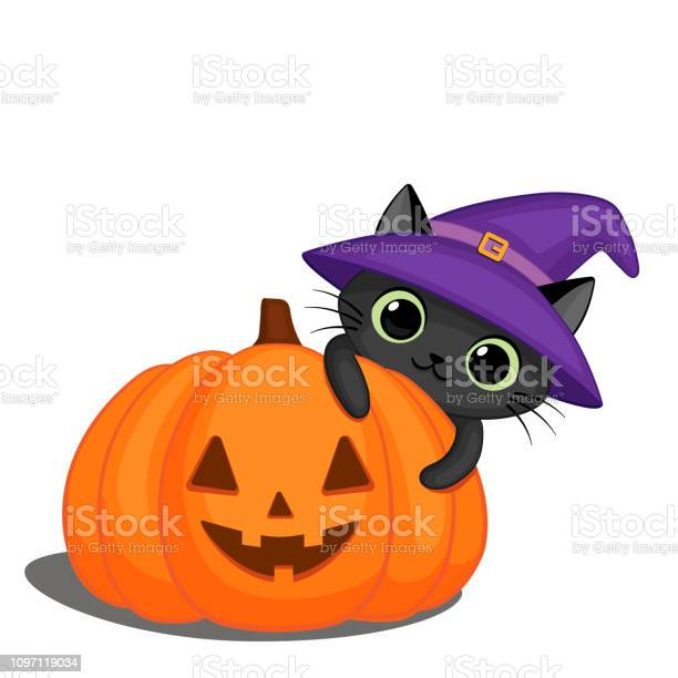 Black cat in a witch hat and a halloween pumpkin vector id1097119034?b=1&k=6&m=1097119034&s=612x612&h=ouikvvjn5di fznll9bwtxllzdb5erargsizi4nwnek=