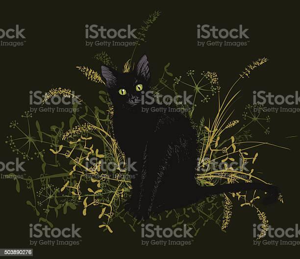 Black cat in a withered grass vector id503890276?b=1&k=6&m=503890276&s=612x612&h=l6 tgioabsvoxwmdyk0kb7ikn7sl8 lsuezt6mqkdew=