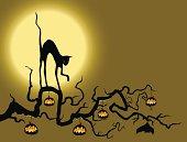 Black Cat in the pumpkin tree