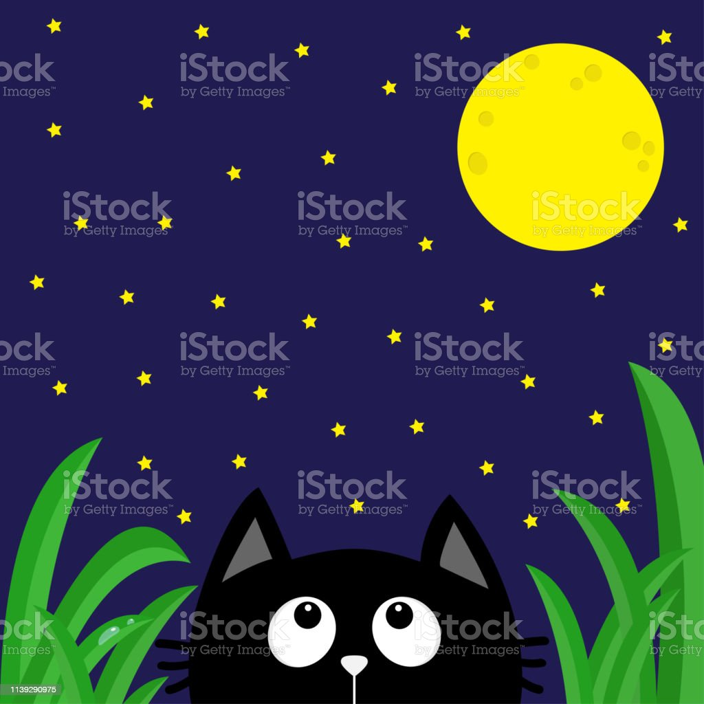 Black cat looking stars and moon in the dark night. Green grass dew...
