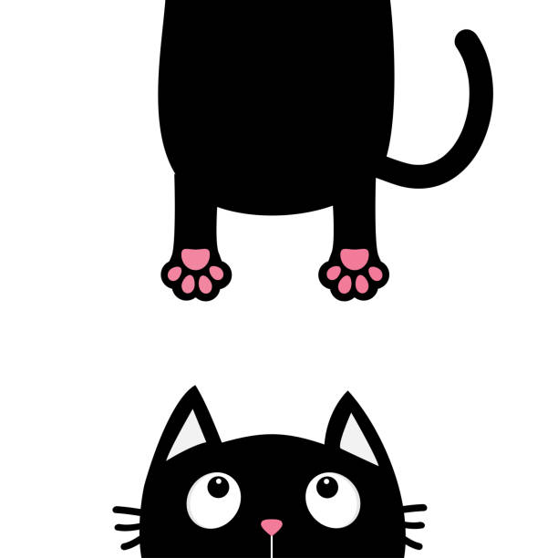 Best White Fat Cat Background Illustrations, Royalty-Free ...