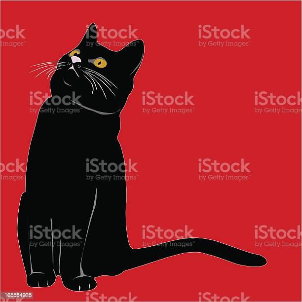 Black cat or kitten vector id165554925?b=1&k=6&m=165554925&s=612x612&h=z1jjdjni9w5l6awbvc3mfaqd9u8uucnhnq3skj p4yc=