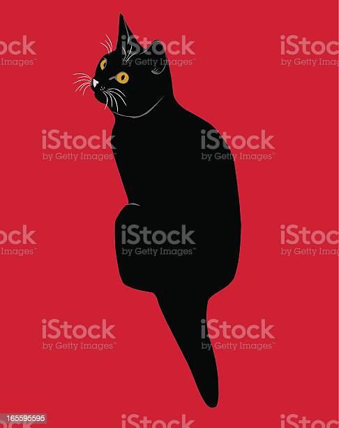 Black cat or kitten vector id165595595?b=1&k=6&m=165595595&s=612x612&h=3jyig1vz4dkjodigutd6cbnhpbo3ucyammdbwv7sjas=