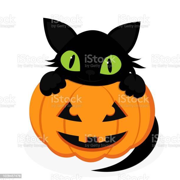 Black cat with pumpkin vector id1028457476?b=1&k=6&m=1028457476&s=612x612&h=baszpbqbhmfk4tfj7bar4tj8hbq52dt1yowaxdwmcee=