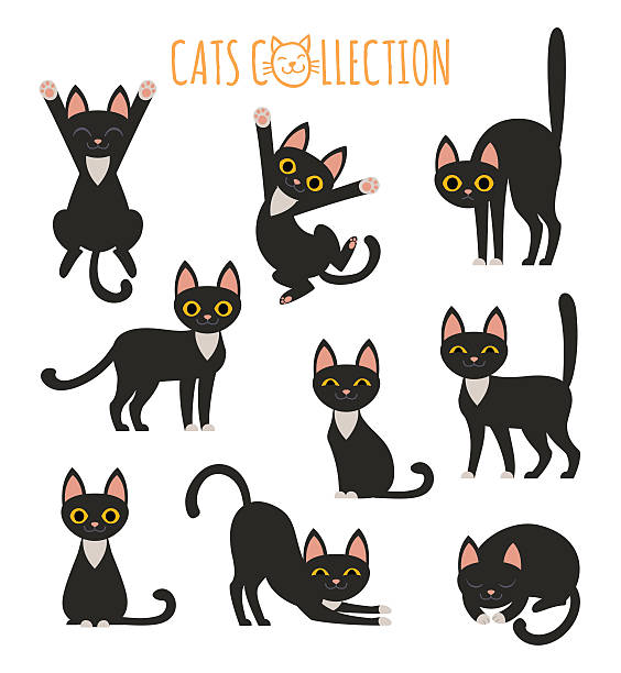 stockillustraties, clipart, cartoons en iconen met black cats collection - in de camera kijken