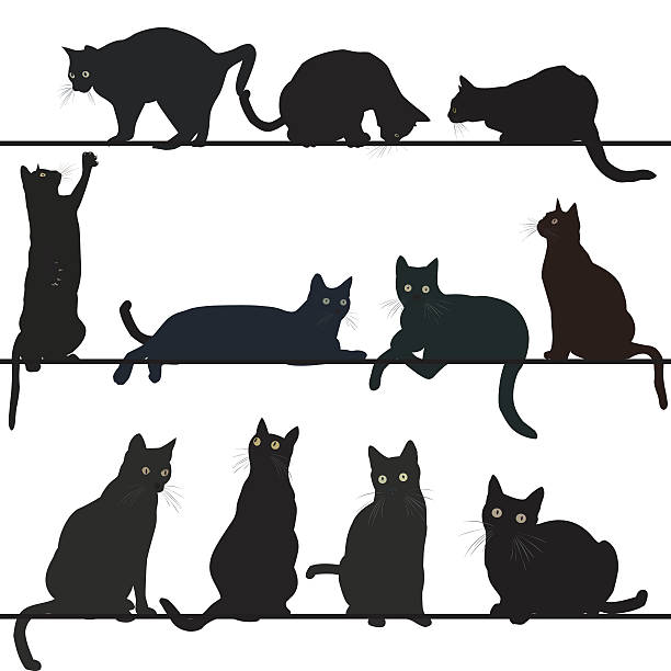 Black cats vector art illustration