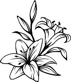 Black contour of lily flowers. Vector illustration.