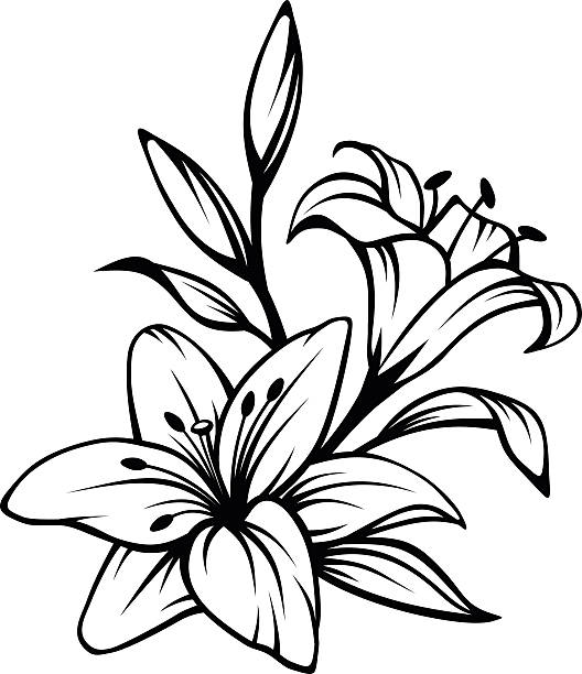 Black contour of lily flowers. Vector illustration. Vector black contour of lily flowers isolated on a white background. lily stock illustrations