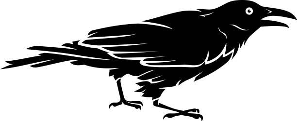 stockillustraties, clipart, cartoons en iconen met zwarte kraai vogel zijaanzicht - aas eten